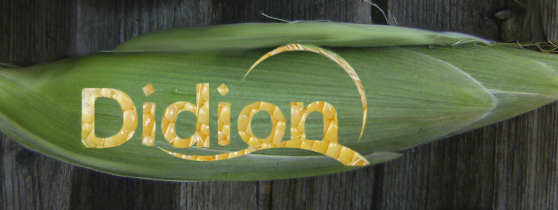 Didion Corn on the cob 1cropped